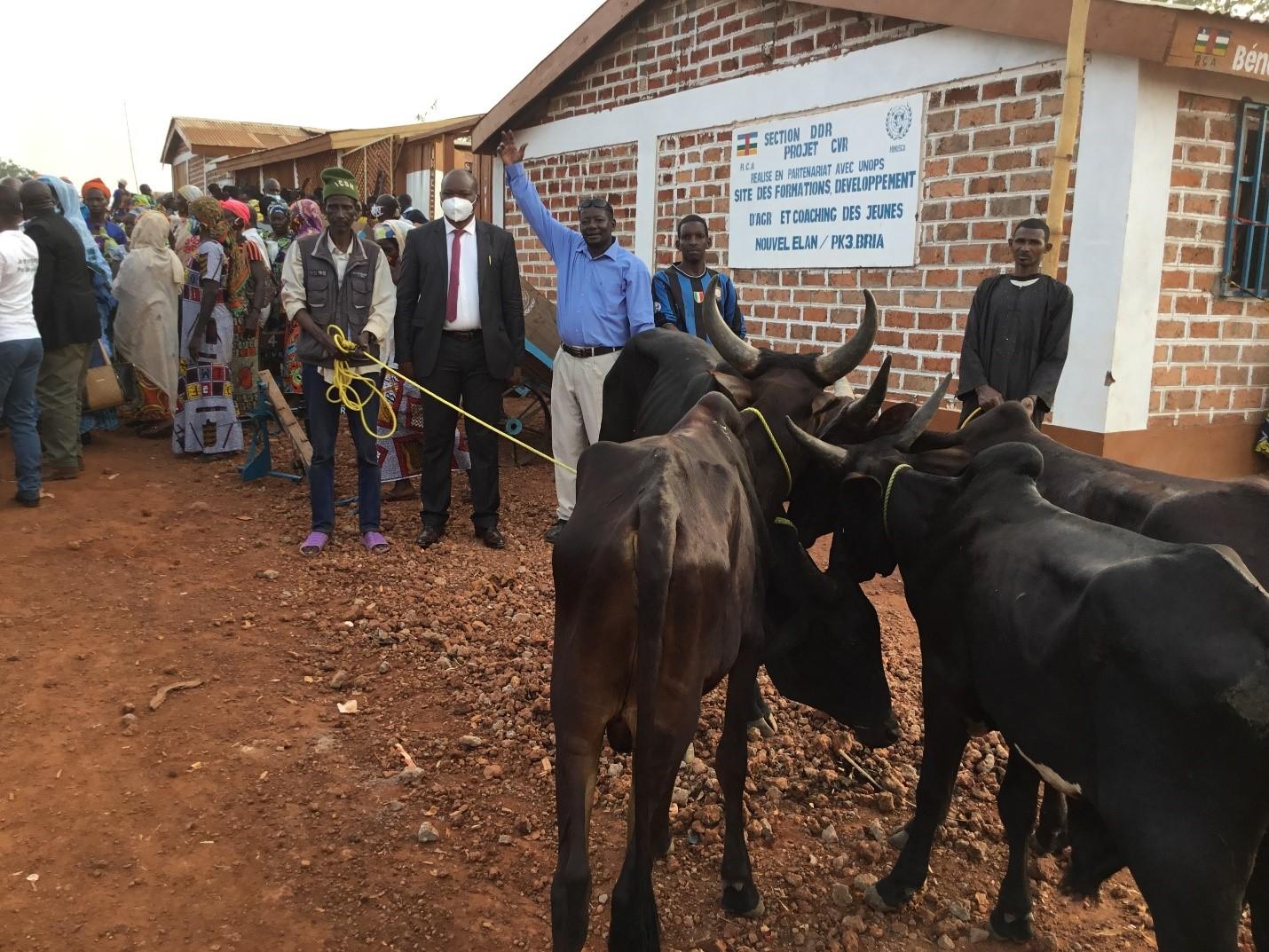 Centrafrique : La section DDR de la MINUSCA contribue à la réduction de violence communautaire à Bria